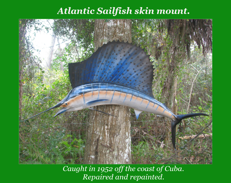 Sailfish_slide.jpg