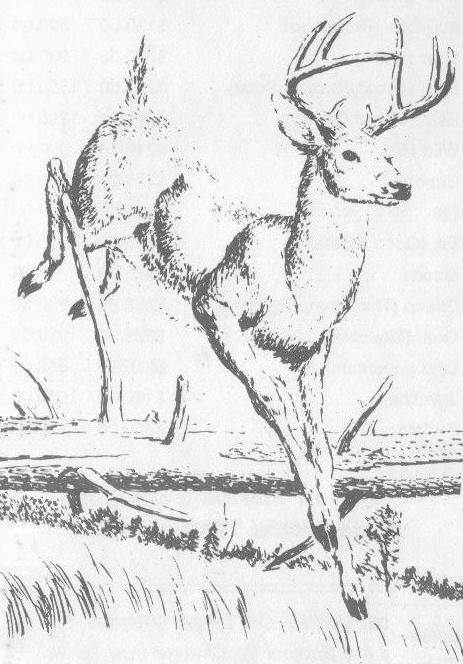 jumping deer logo